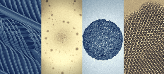 Polskie Towarzystwo Mikroskopii